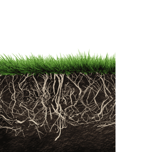 Layer1 roots
