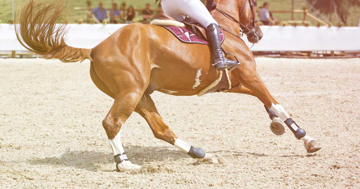 Horse Footing